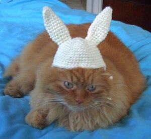 ウサ帽子似合わないねこ