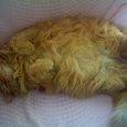 よく寝る猫は、横に育つ?